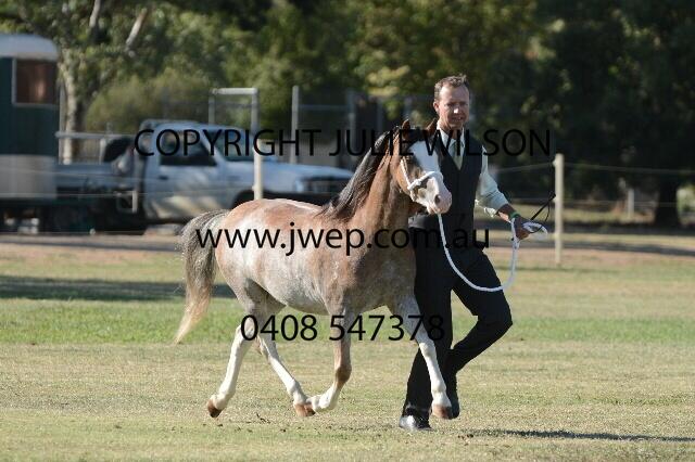 Julie wilson horse deals